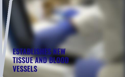 tissue-blood-vessels